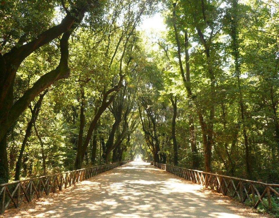 Uno scorcio del Parco di Capodimonte!!!