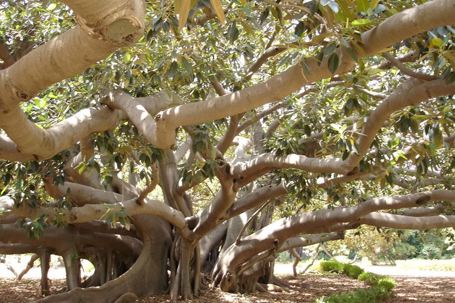 Orto Botanico di Portici
